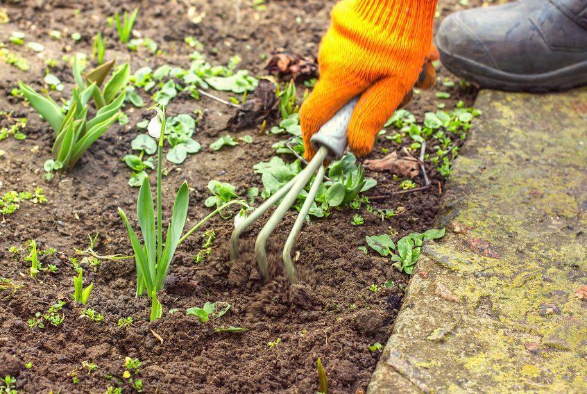 9 steg: Fixa trädgården inför hösten