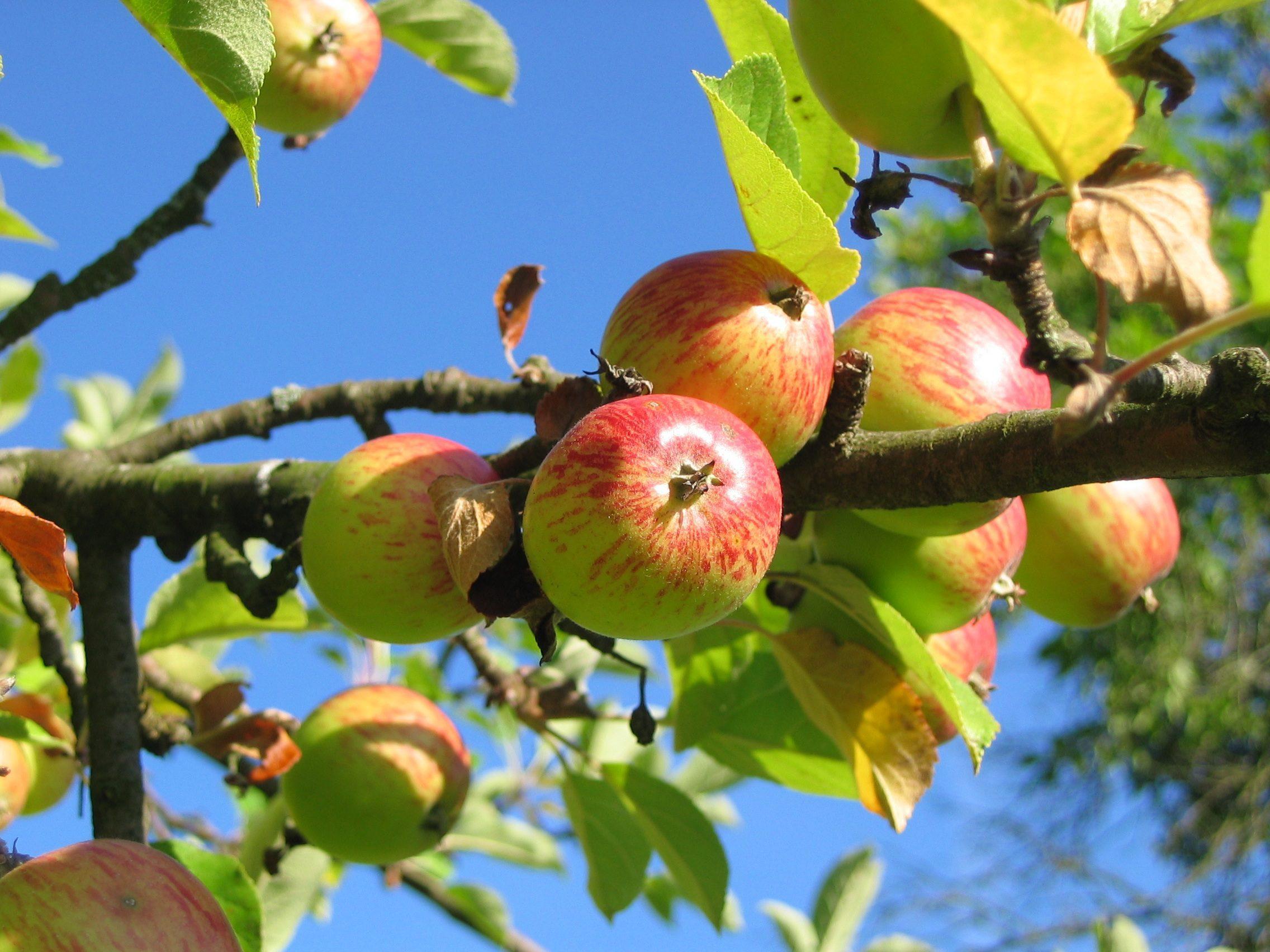 Detta bör du göra för din trädgård i Oktober – och så tar du vara på frukten