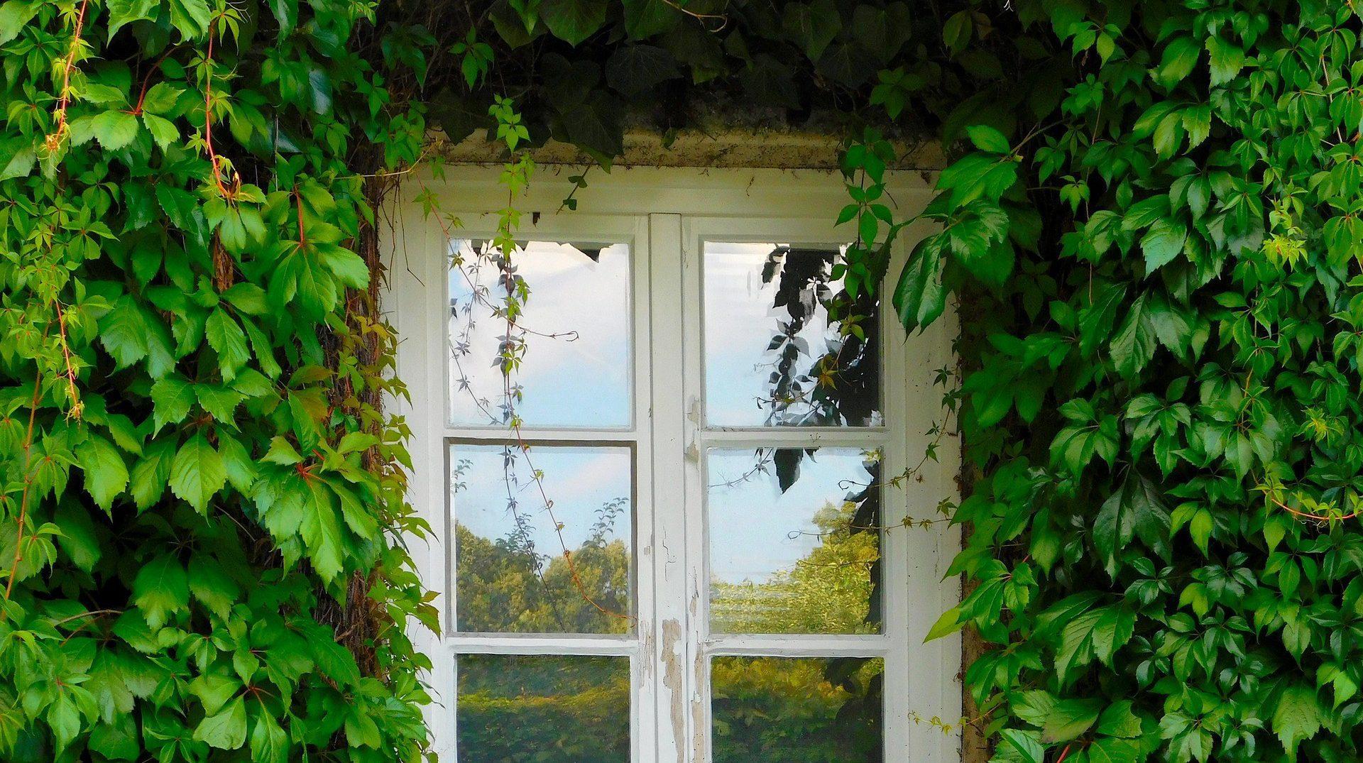 Dags att fräscha upp dina fönster?